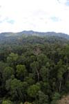 Rainforest in Borneo -- sabah_aerial_0224
