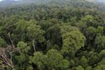 Rainforest in Borneo -- sabah_aerial_0225
