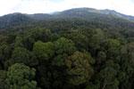 Rainforest in Borneo -- sabah_aerial_0228