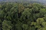 Rainforest in Borneo -- sabah_aerial_0229
