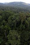 Rainforest in Borneo -- sabah_aerial_0230