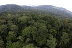 Rainforest in Borneo -- sabah_aerial_0231