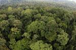 Rainforest in Borneo -- sabah_aerial_0232