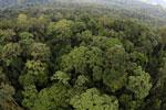 Rainforest in Borneo -- sabah_aerial_0233