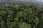 Rainforest in Borneo -- sabah_aerial_0234