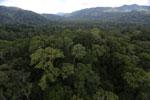 Rainforest in Borneo -- sabah_aerial_0237
