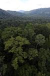 Rainforest in Borneo -- sabah_aerial_0238