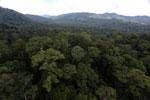 Rainforest in Borneo -- sabah_aerial_0239