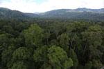 Rainforest in Borneo -- sabah_aerial_0242