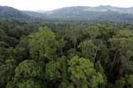 Rainforest in Borneo -- sabah_aerial_0243