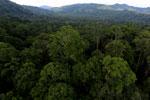Rainforest in Borneo -- sabah_aerial_0244