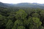 Rainforest in Borneo -- sabah_aerial_0245