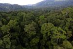 Rainforest in Borneo -- sabah_aerial_0246