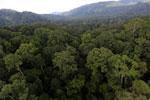Rainforest in Borneo -- sabah_aerial_0247