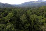 Rainforest in Borneo -- sabah_aerial_0248
