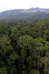 Rainforest in Borneo -- sabah_aerial_0249