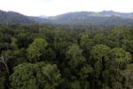 Rainforest in Borneo -- sabah_aerial_0250
