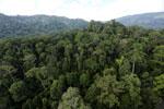Rainforest in Borneo -- sabah_aerial_0251