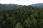 Rainforest in Borneo -- sabah_aerial_0252