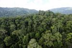 Rainforest in Borneo -- sabah_aerial_0253