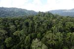 Rainforest in Borneo -- sabah_aerial_0255