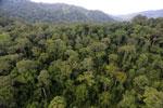 Rainforest in Borneo -- sabah_aerial_0259