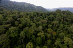 Rainforest in Borneo -- sabah_aerial_0261