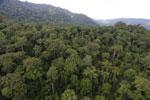 Rainforest in Borneo -- sabah_aerial_0262