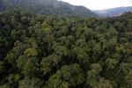Rainforest in Borneo -- sabah_aerial_0264