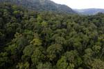 Rainforest in Borneo -- sabah_aerial_0266