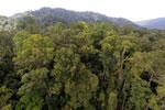 Rainforest in Borneo -- sabah_aerial_0268