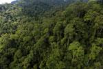 Rainforest in Borneo -- sabah_aerial_0269