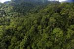 Rainforest in Borneo -- sabah_aerial_0270