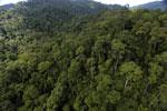 Rainforest in Borneo -- sabah_aerial_0271