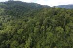 Rainforest in Borneo -- sabah_aerial_0273
