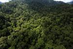 Rainforest in Borneo -- sabah_aerial_0275