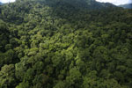 Rainforest in Borneo -- sabah_aerial_0276