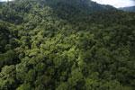 Rainforest in Borneo -- sabah_aerial_0277