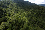 Rainforest in Borneo -- sabah_aerial_0278