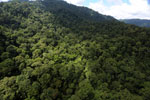 Rainforest in Borneo -- sabah_aerial_0279