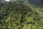 Rainforest in Borneo -- sabah_aerial_0280