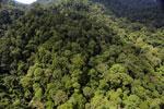 Rainforest in Borneo -- sabah_aerial_0281