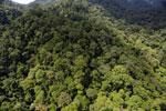 Rainforest in Borneo -- sabah_aerial_0282