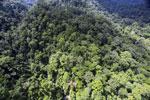 Rainforest in Borneo -- sabah_aerial_0284