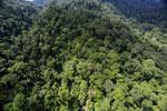 Rainforest in Borneo -- sabah_aerial_0285