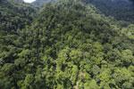 Rainforest in Borneo -- sabah_aerial_0286