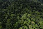 Rainforest in Borneo -- sabah_aerial_0287