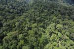 Rainforest in Borneo -- sabah_aerial_0288