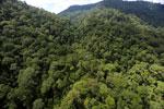 Rainforest in Borneo -- sabah_aerial_0291