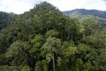 Rainforest in Borneo -- sabah_aerial_0294